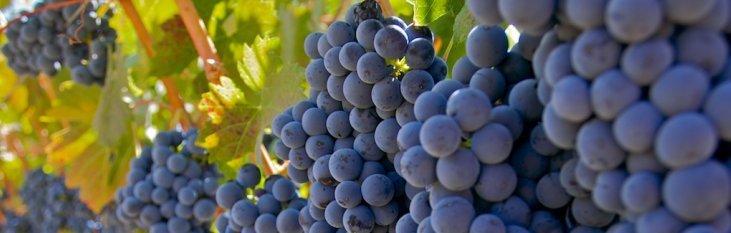 wijngebieden, spanje, wijn, wijnproducenten, wijngaarden, druiven
